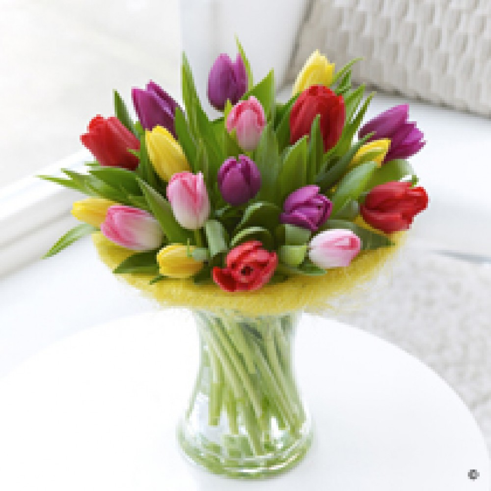 Tulip Perfect Gift
