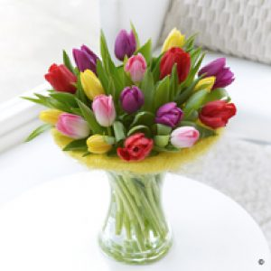 Tulip Perfect Gift